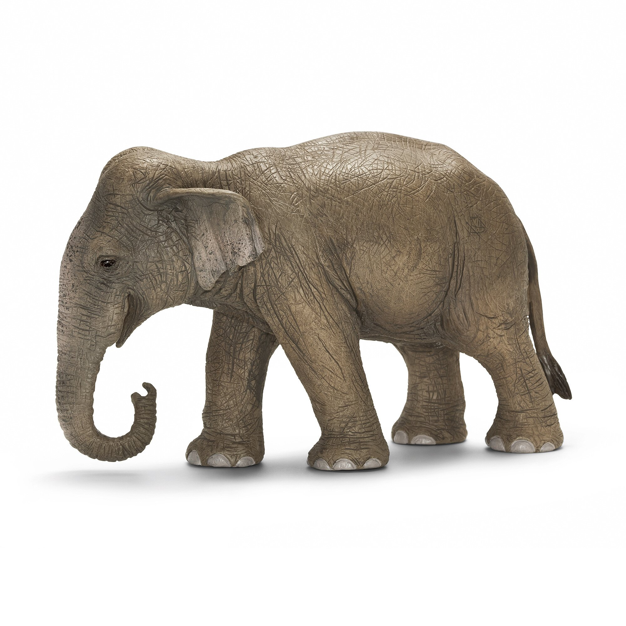 aziatische-olifant-vrouwtje