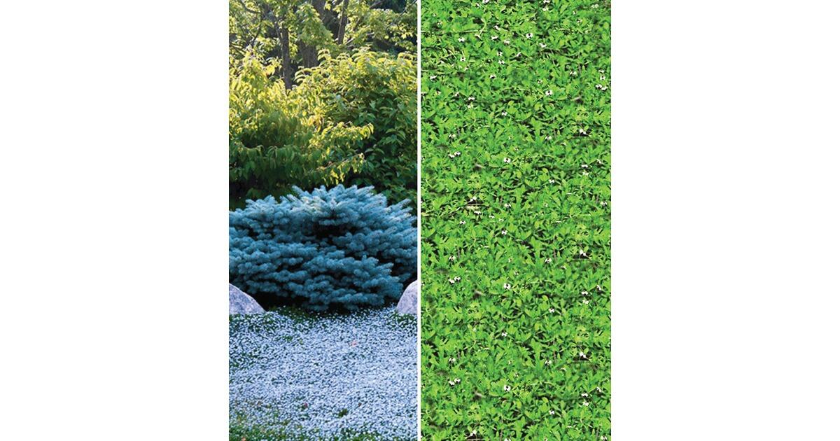 400pc Mehrfarben Speedwell Blumensamen mehrjährige Bodendecker einfache M4A3