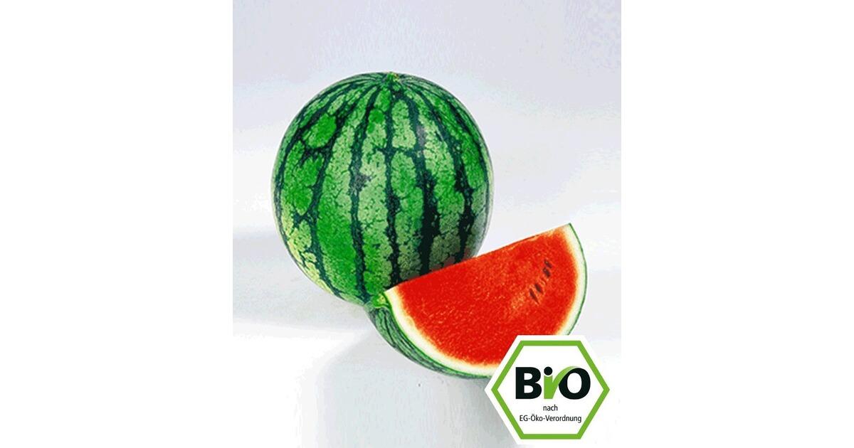 Wassermelone Pflanzen Kaufen : bio melone 39 ingrid 39 f1 2 pflanzen wassermelone bio melonenpflanze online kaufen die moderne ~ Watch28wear.com Haus und Dekorationen