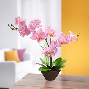 Deko Traum Orchidee Online Kaufen Die Moderne Hausfrau
