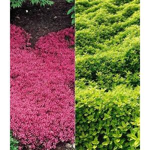 Carex \'Bronze Reflection\' Segge, 3 Pflanzen online kaufen | Die ...
