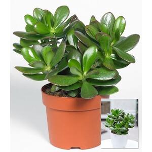 Moderne Grünpflanzen baldur zimmerpflanzen kaufen die moderne hausfrau
