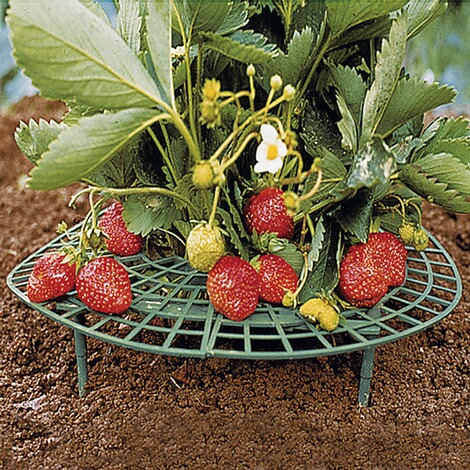 Pot mural en terre cuite pour fraisier forme cruche