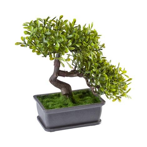 bonsai online kaufen die moderne hausfrau. Black Bedroom Furniture Sets. Home Design Ideas
