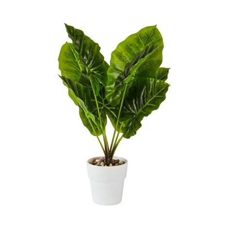 Zimmerpflanze online kaufen die moderne hausfrau - Zimmerpflanze rankend ...
