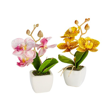 Mini-Orchideen  rosa 2