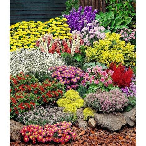 Roter Mauerpfeffer großer staudengarten stauden sortiment staudenbeet 14 pflanzen