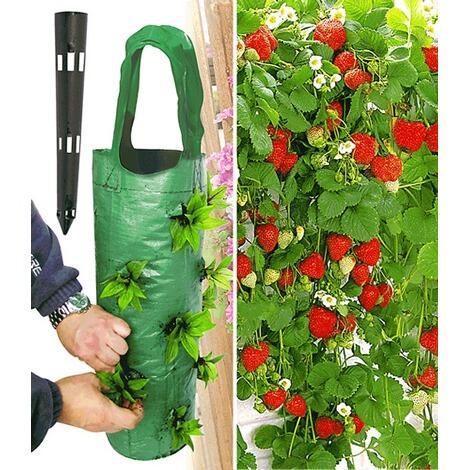 Hänge Erdbeere® U0027Hummi®u0027 3 Pflanzen U0026 Pflanzbeutel U0027Kaskadeu0027 ...