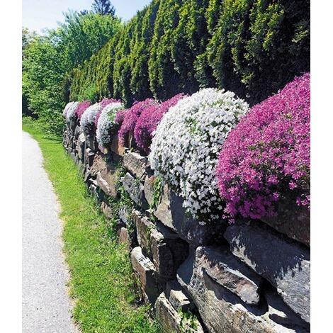 steingarten bilder pflanzen, steingarten phlox-mix 4 pflanzen phlox subulata weiß und rosa, Design ideen