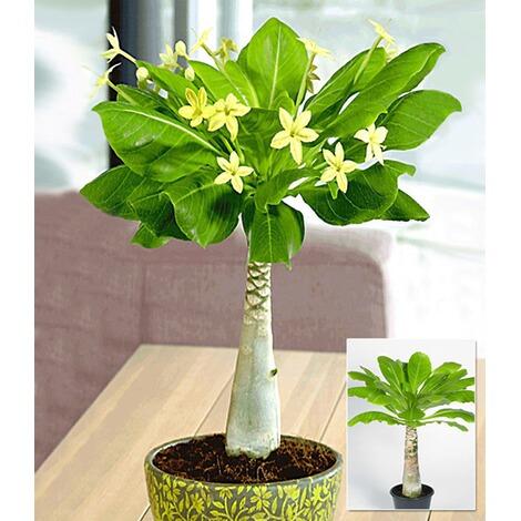 zimmerpflanzen mix bl hende lieblinge 3 pflanzen online kaufen die moderne hausfrau. Black Bedroom Furniture Sets. Home Design Ideas