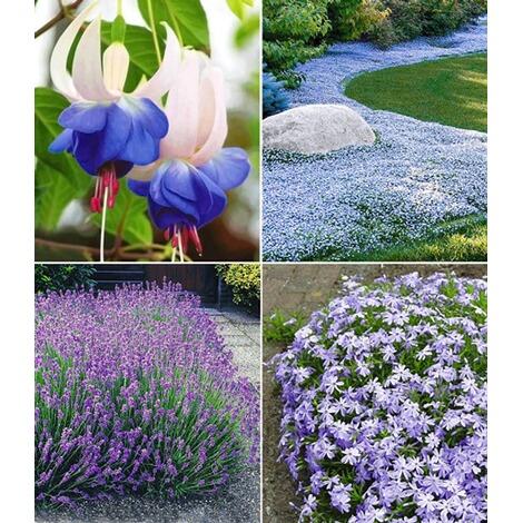 Blauer Stauden Garten12 Pflanzen Online Kaufen Die Moderne Hausfrau