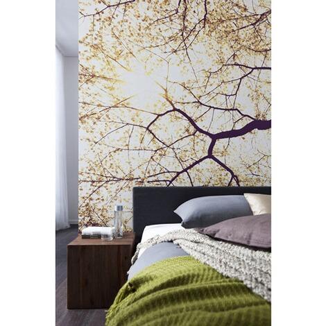 fototapete 250x250, vlies-fototapete sunshine, 250 x 250 cm / 5-tlg. online kaufen | die, Design ideen